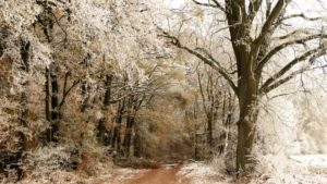 Winter Abstecher in den Wald Frost