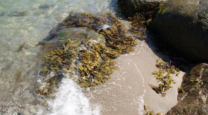 Chlorella Algen als Nahrung