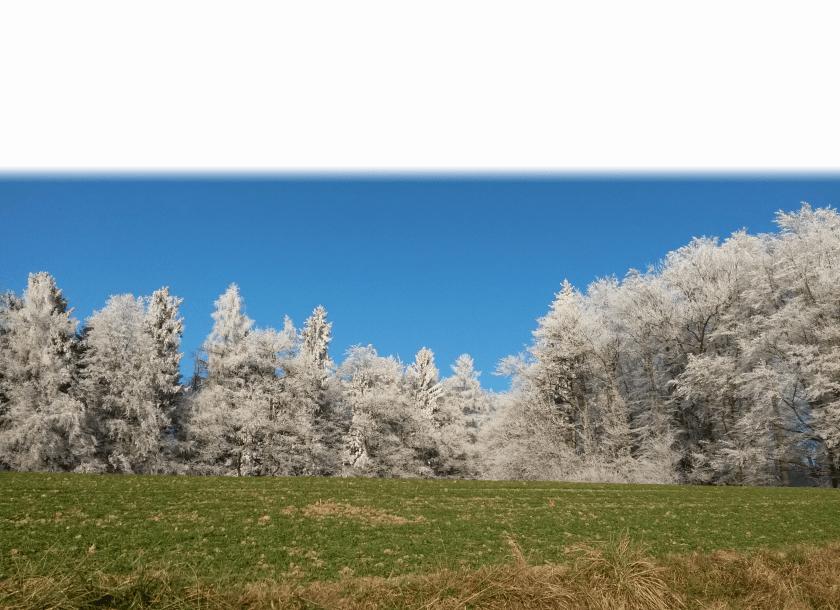 Wynigerbergwald mit weissem Rand oben