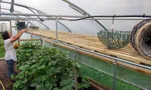 Suspended Staging for Polytunnels