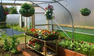 March: Make the Most of the Space in Your Polytunnel