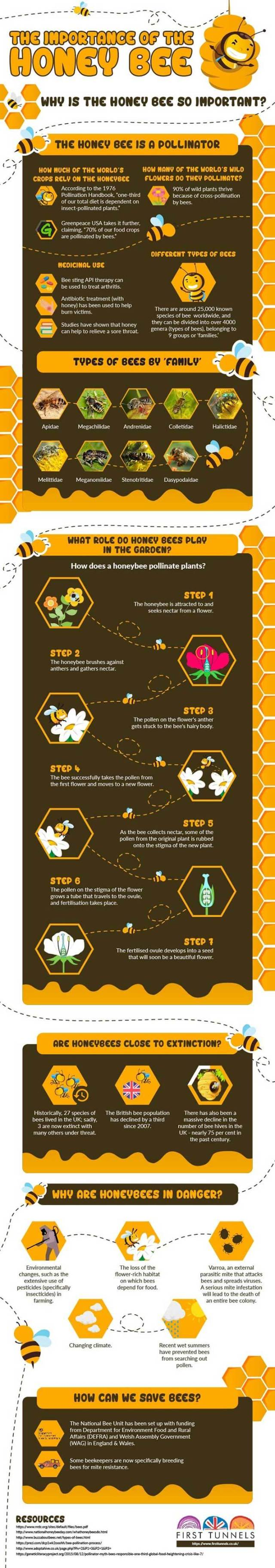 The Importance Of The Honey Bee (Infographic)