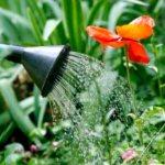CÓMO REGAR PLANTAS EN INVIERNO