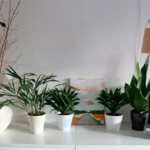 PLANTAS DE INTERIOR, CUIDADOS EN PRIMAVERA