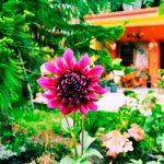 SOLUCIONES PARA CUIDAR TUS PLANTAS EN VACACIONES