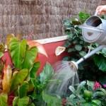 ¿CUÁNTO DEBO REGAR A MIS PLANTAS?