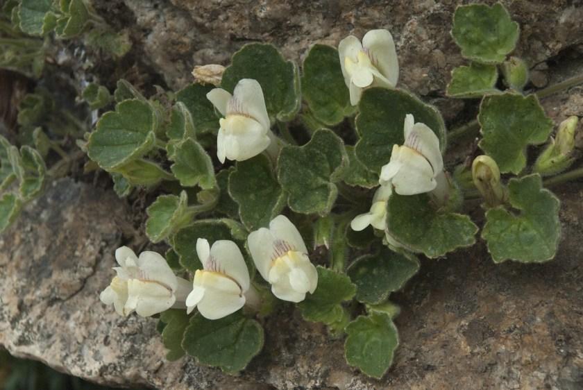 Patricia Löpez Diseño Floral - Floristería en Añover de Tajo