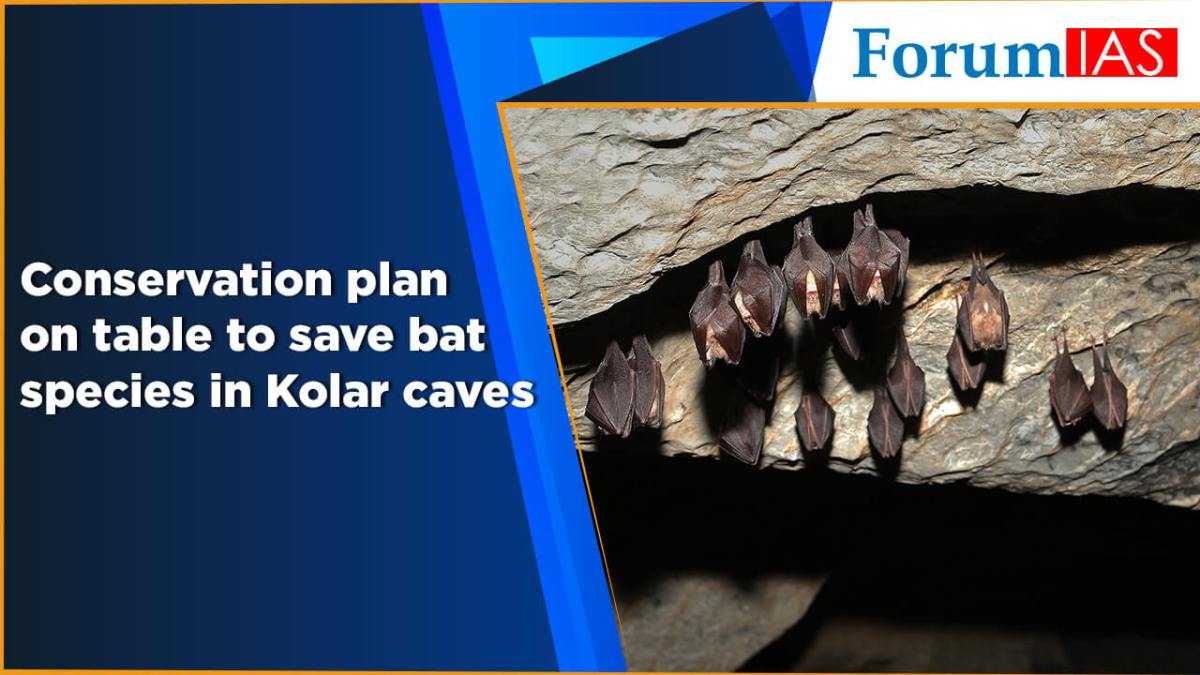 Conservation plan on table to save bat species in Kolar caves