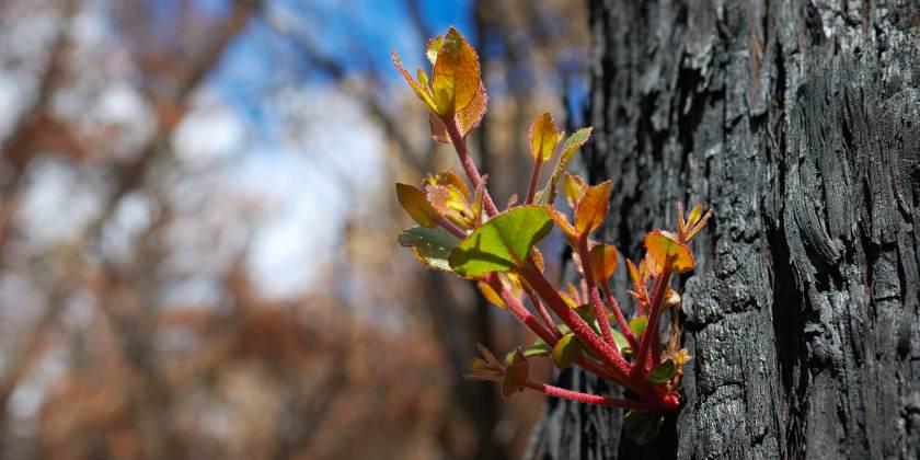 bushfire-bg.jpg