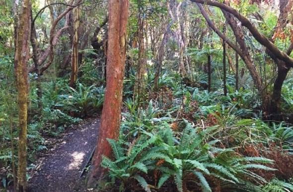 Le bush natif à Stewart Island