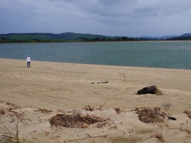 Surrat Bay (2)