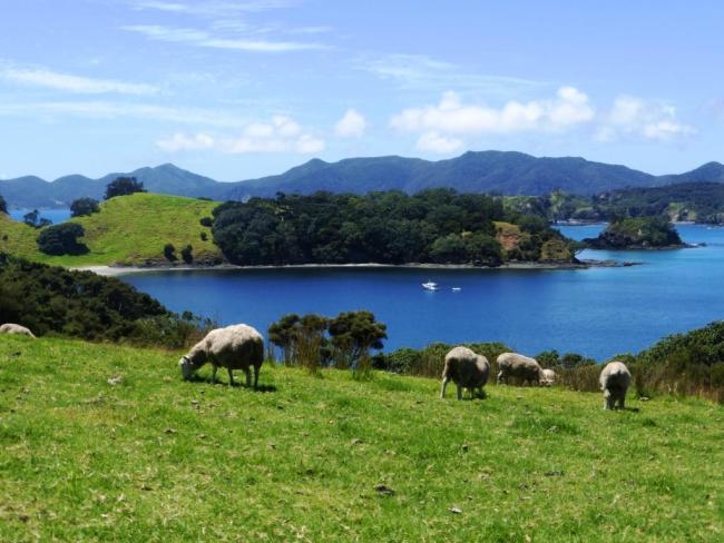 Bay of Island Nouvelle Zelande