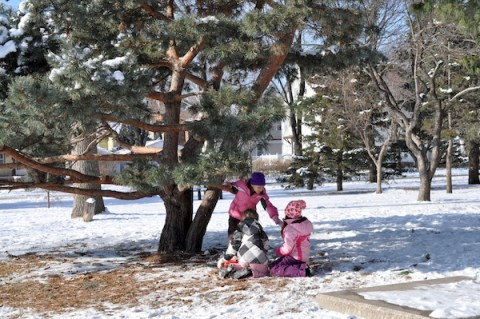 1st & 2nd graders at recess under a favorite tree.