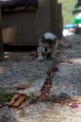 Kitten chasing