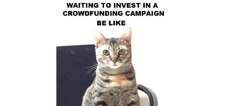 Crowdfunding cat meme