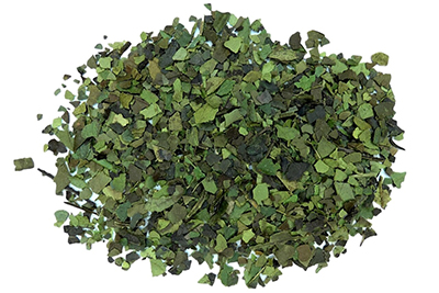 Green Guayusa herbal tea, close relative of yerba mate in the holly family