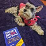 New dog training book Pancha says shell be a goodhellip