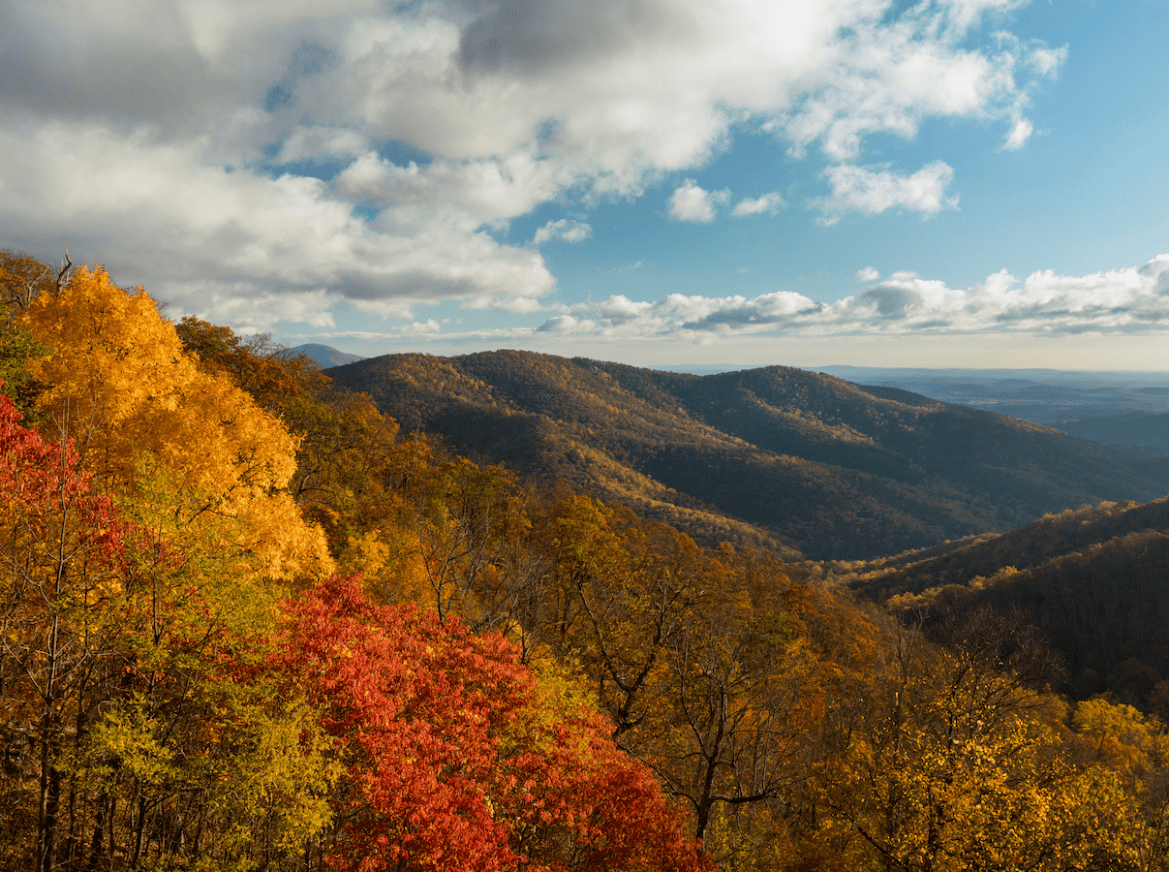 Scenic overlook of ridge lines covered by fall foliage in Shenandoah National Park