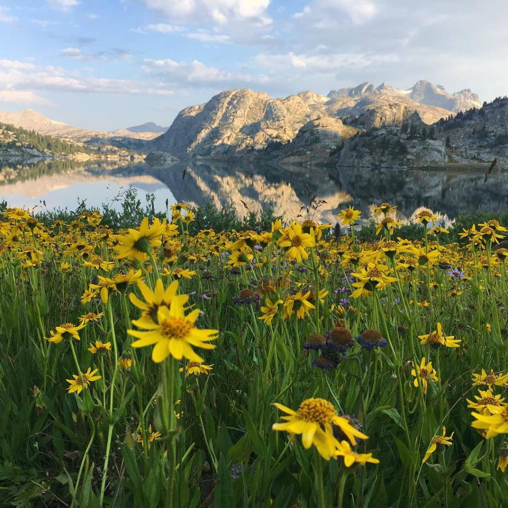 the Wind River Range in Wyoming, mountain in background and yellow flowers in foreground.