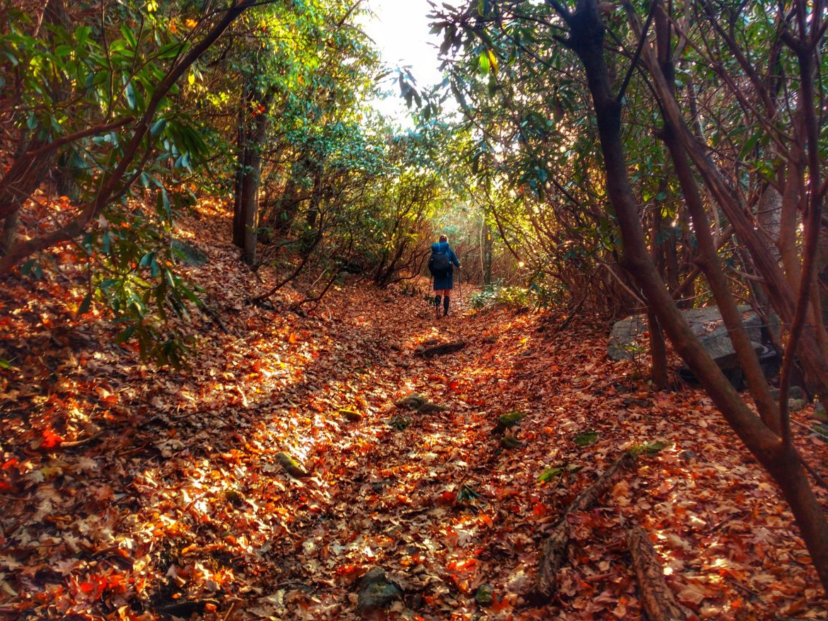 Heather Anderson hiking in through a leaf covered forest.