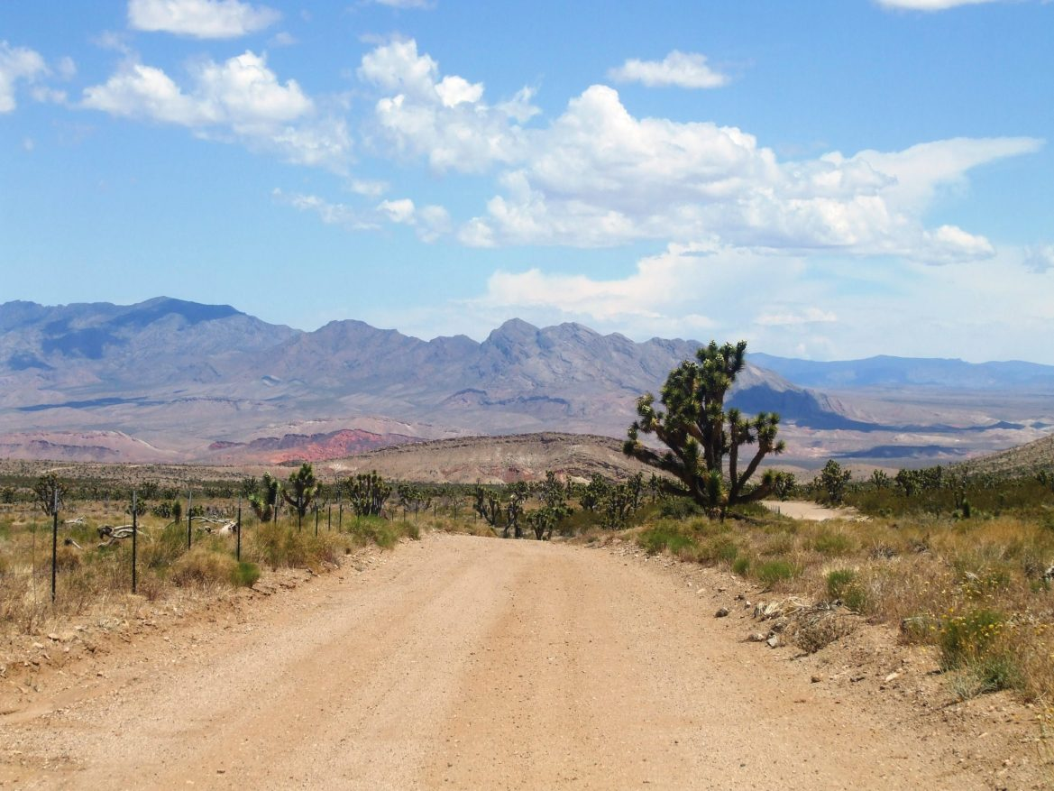 An open dirt road through the desert passes by cacti, leading to purple mountains in the distance.