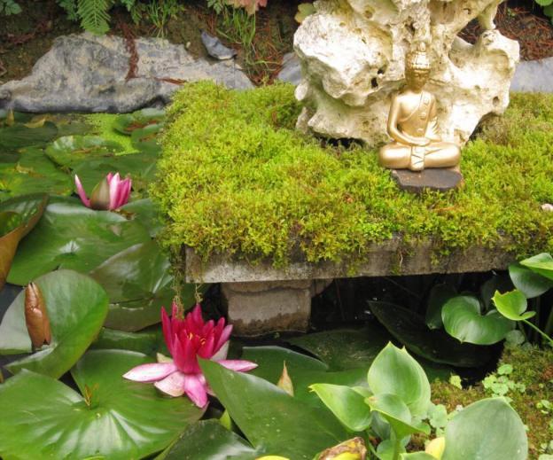 Buddha mit Seerosen