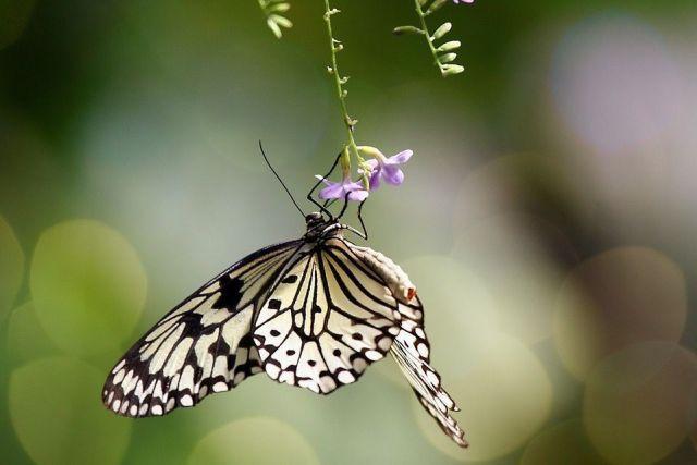 atraer-mariposas