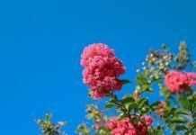arbustos aromáticos