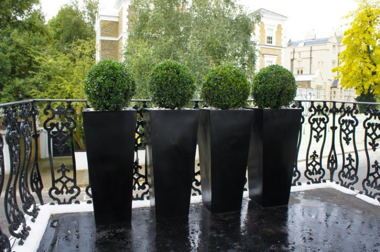 13 Topiary Planter Ideas That Will Have You Priming Your Shears     Set of Four Circular Topiary in Tall Black Planters
