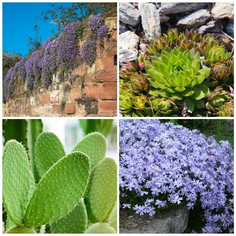 10 Plants That Grow On Rocks Garden Lovers Club