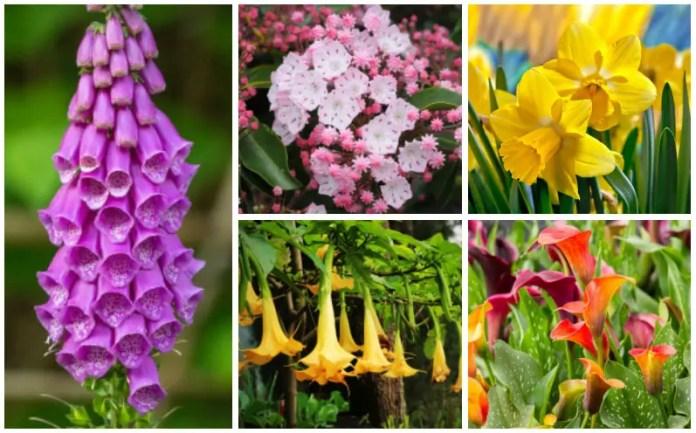 Garden Poisonous Flowers
