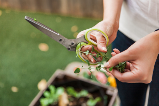health benefits of gardening and staying active
