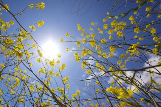 sunlight on plants