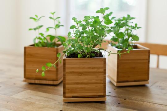 gardenuity plants
