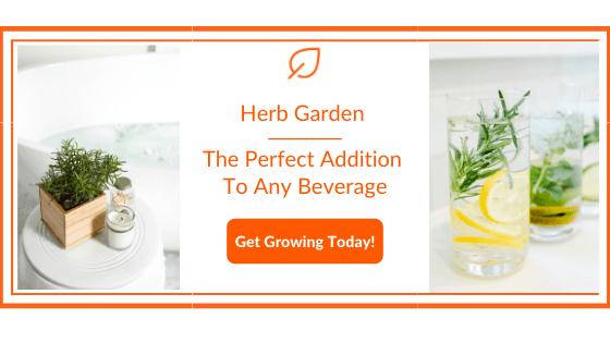 Herb Garden for Tea