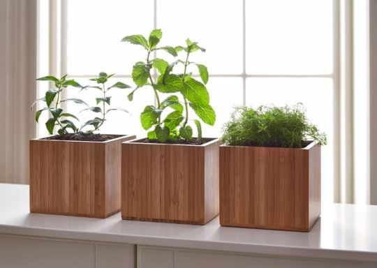 herbs in bamboo boxes