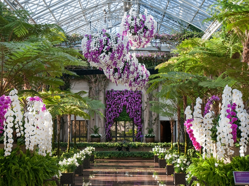 Longwood Gardens Orchid Room