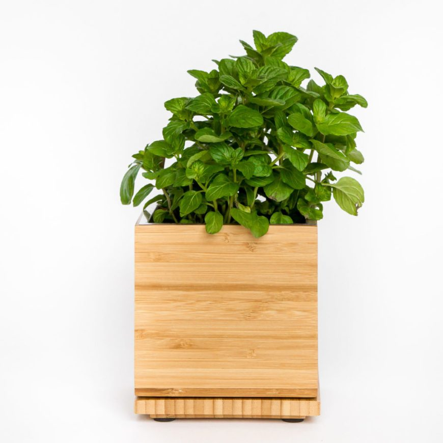 Mint Bamboo Box Gardenuity