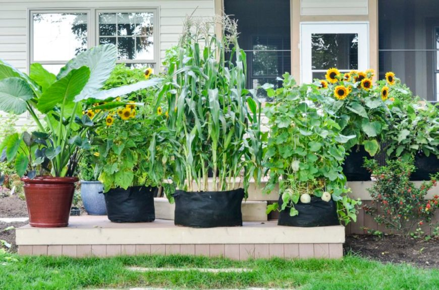 Multiple Container Gardens