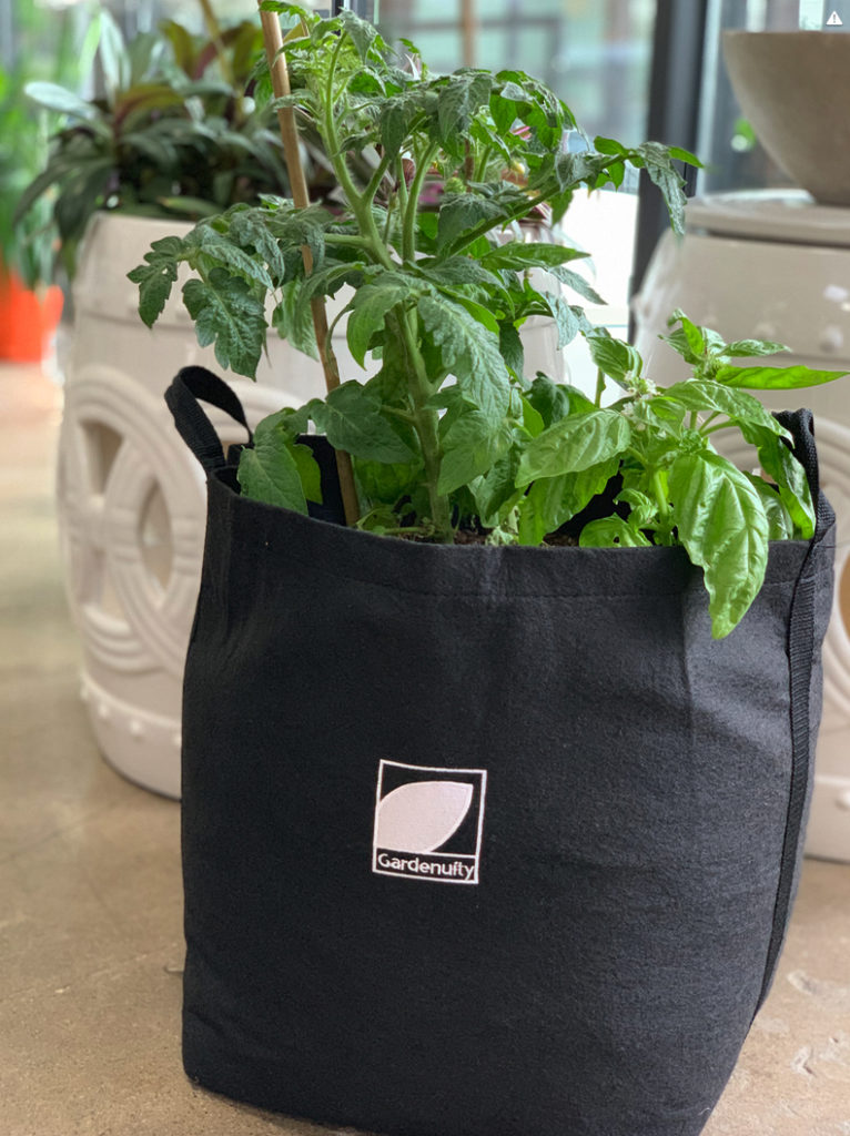 Growing Tomatoes In A Container Garden