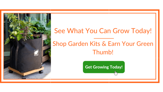 Growing Tomatoes - Gardenuity Garden Box