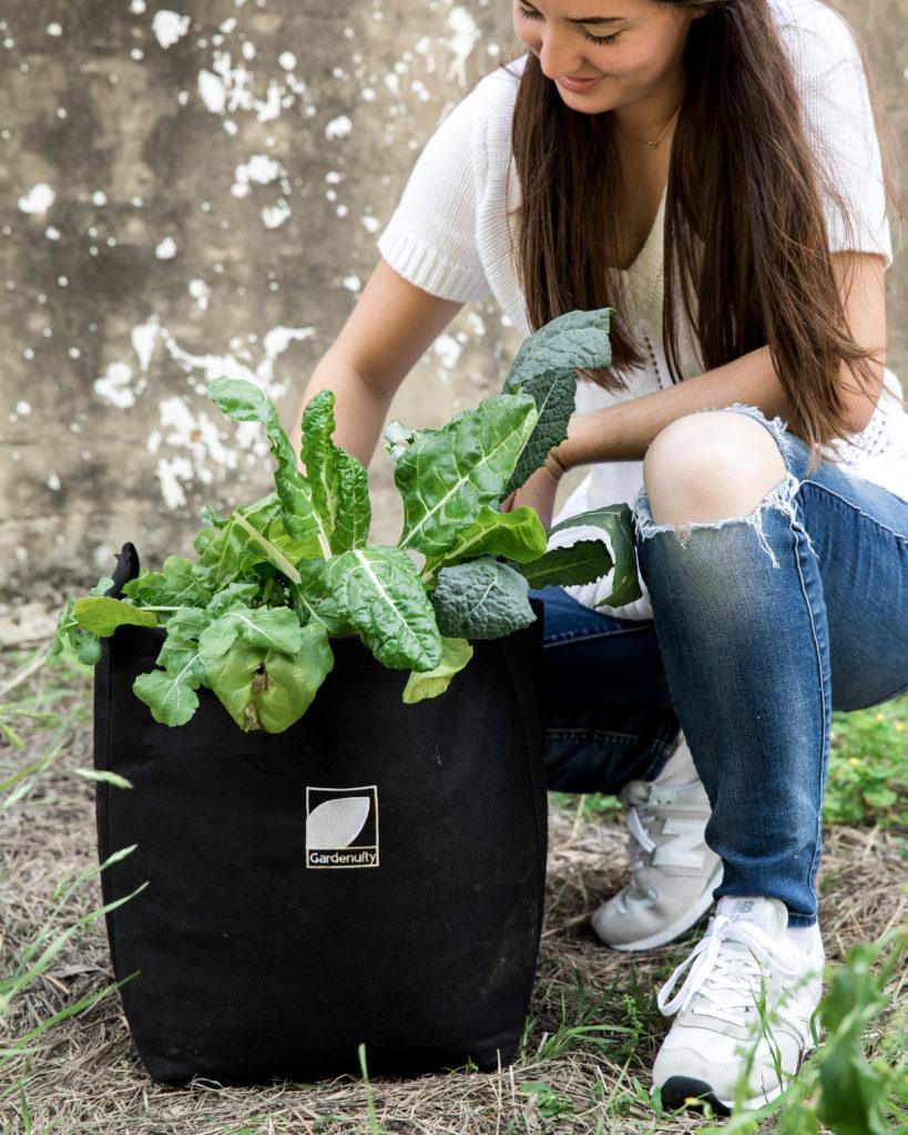 planting a winter vegetable garden