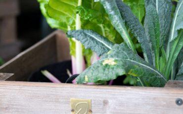 Gardenuity Vegetable Garden