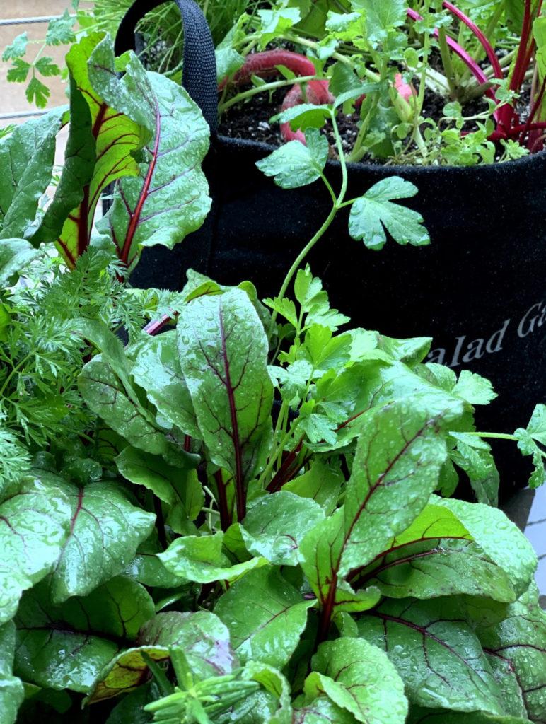 Eco Friendly Gardenuity Container Garden