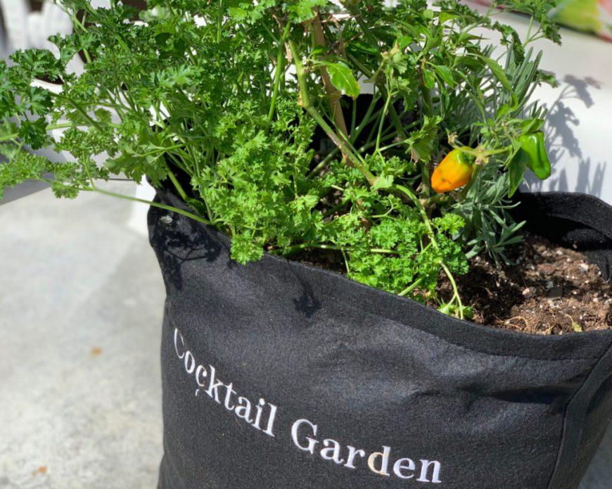 Gardenuity Pepper Garden Kit