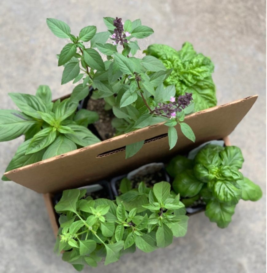 Best Vegetables for Spring Container Gardening