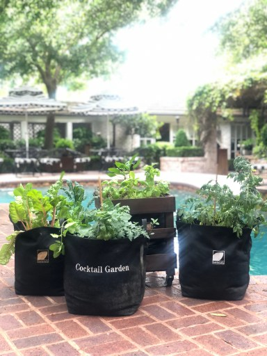 Best Containers for Container Vegetable Gardening
