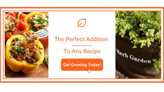 Herb Garden For Recipes