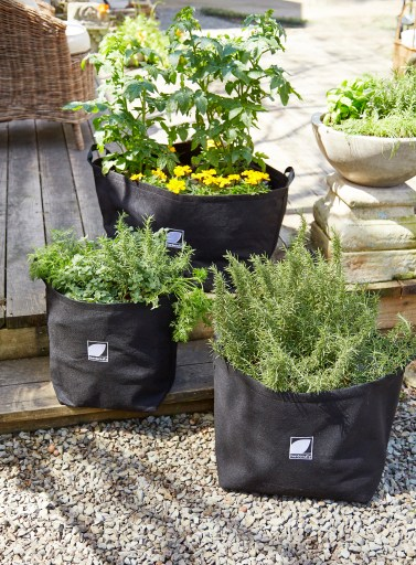 Container Gardens in Shade for Hot Weather Gardening