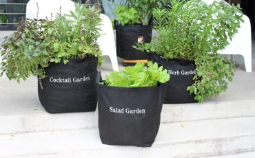 Container Garden Kits